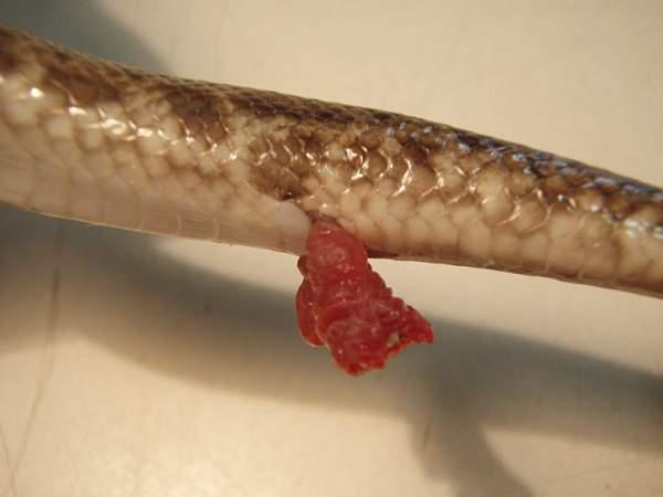Pics of penes